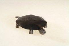 turtle01_01